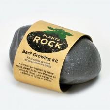 "Plants rock "" Basilic """