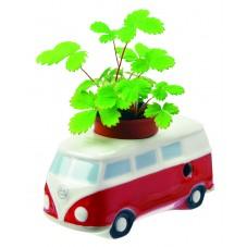 """Plante à faire pousser """" Fourgonnette """""""