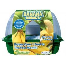"""Plante à faire pousser """" Fleur de banane """""""